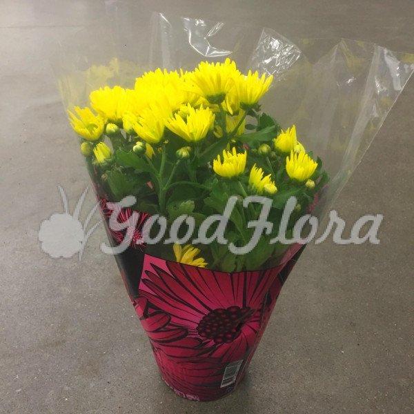 Хризантема Бриз желтая