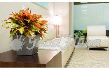 Какие выбрать цветы в офис?