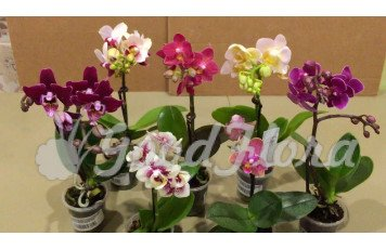 Решились приобрести орхидеи, но не знаете, как ухаживать?