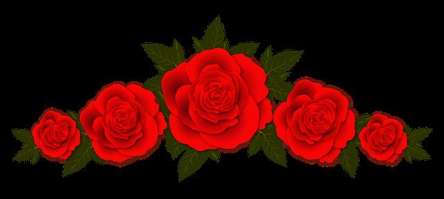 Розы очень популярные комнатные растения