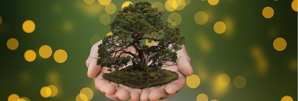 Японское дерево бонсай