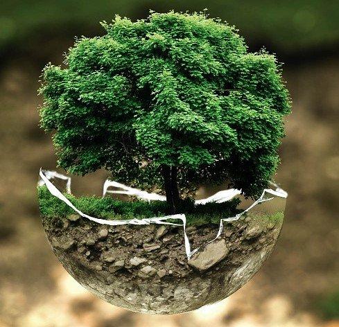 Каталог японских деревьев бонсай