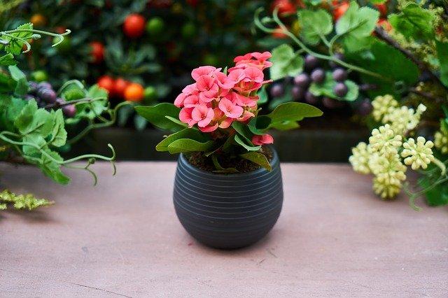 Каталог комнатных растений в горшках