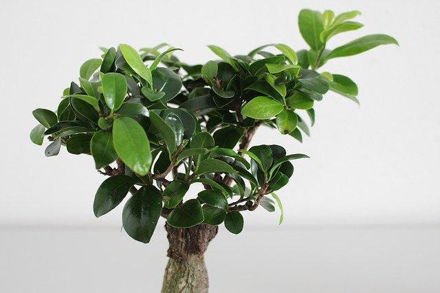 Каталог декоративно-лиственных растений в горшках
