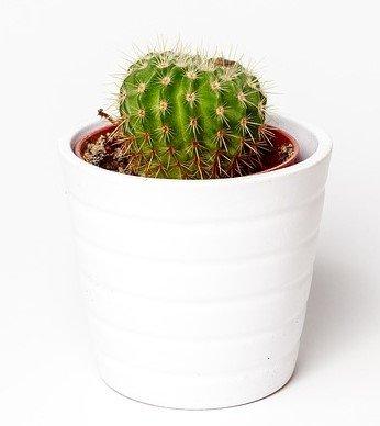 Каталог кактусов и суккулентов