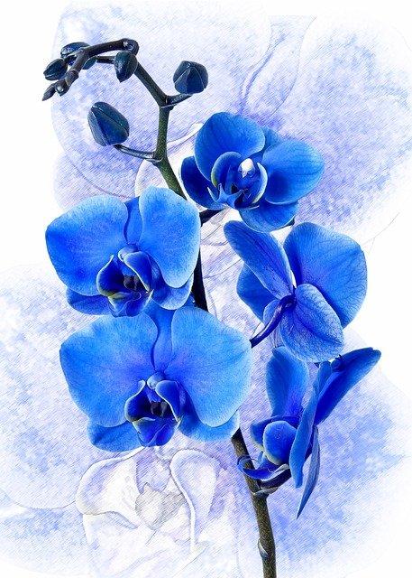 Каталог орхидей Фаленопсисов