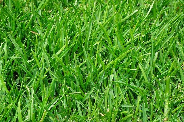 Растущие семена газонной травы